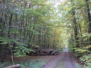 1-autumn walk