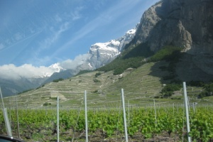 vineyards above Chamoson, Valais