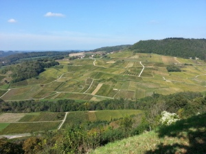 Vineyards of Chateau-Chalon, Jura