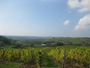 Domaine Badoz' Les Roussots vineyards outside Poligny