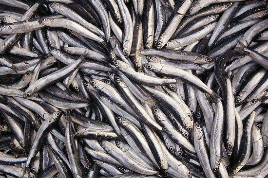 Sardines anchovies