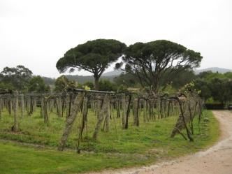 Quinta de Couselo, O Rosal, Galicia
