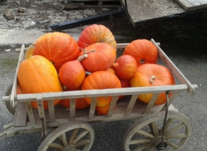a barrow full of pumpkins, copyright Sue Style 2015