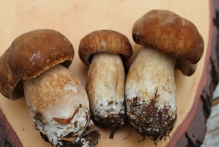 ceps by Sue Style