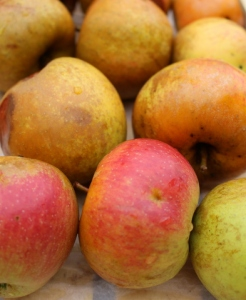 windfall russet apples by Sue Style
