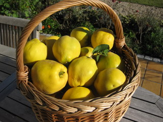 quinces in basket