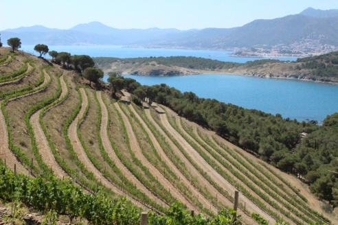 Finca Garbet, one of Castillo Perelada's finest vineyards