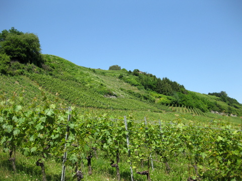 Cru de l'Hôpital vineyards, copyright Sue Style
