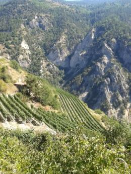 Shimmering heat in Jean-René Germanier's Clos de la Couta vineyard