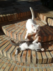 Some of the cats at Mas Figueres, photo Sue Style