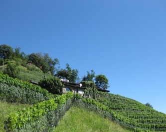Cantina Monti vineyards at Cademario