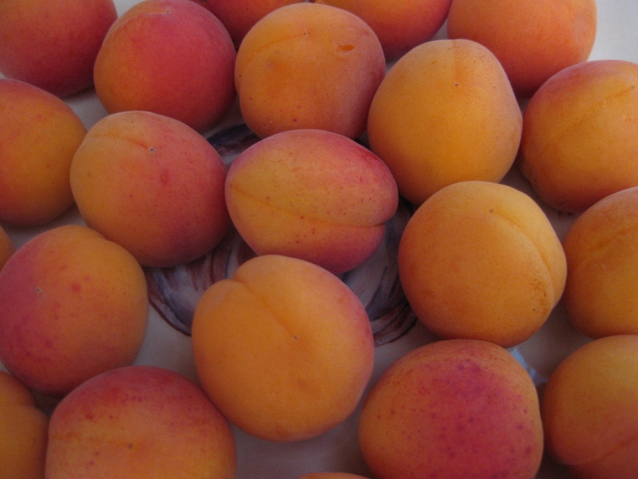 Blushing Apricots are Back in Season