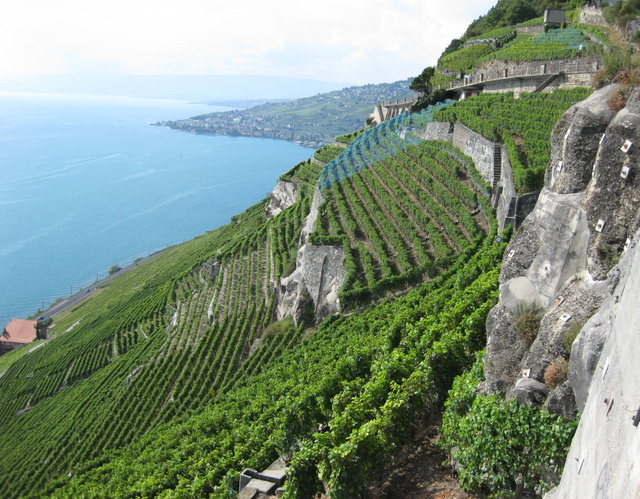 Vineyards of Lavaux, UNESCO World Heritage Site